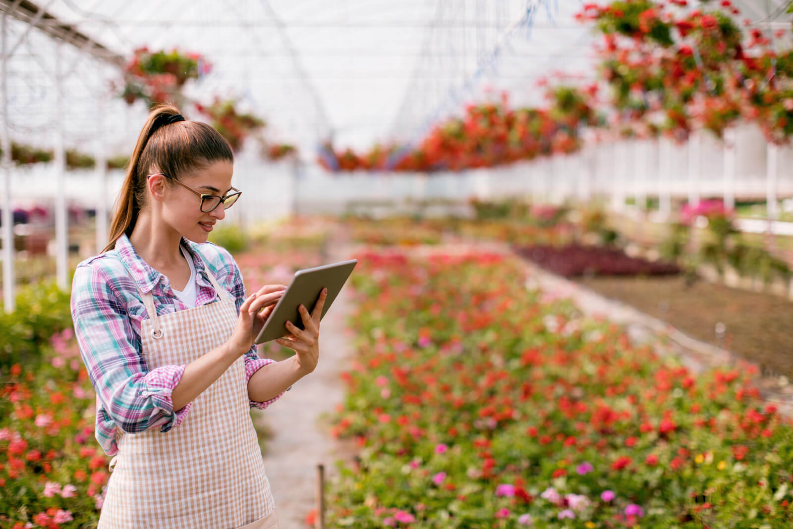 A young woman with a tablet in a greenhouse